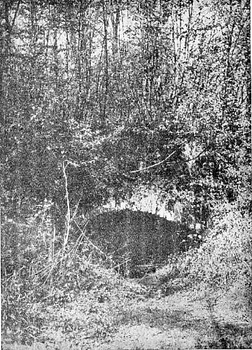 La cave du R'mite