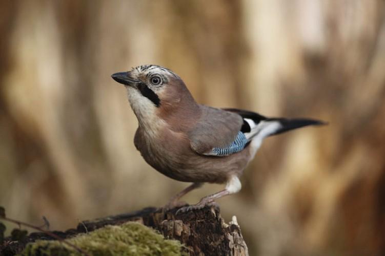 La faune de la forêt domaniale de Colfontaine