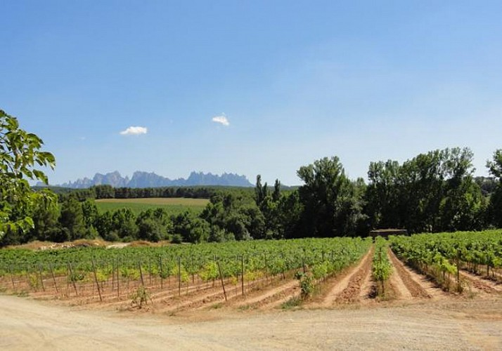 Full Day in Montserrat with Tour of a Vineyard and Wine Tasting – Small group