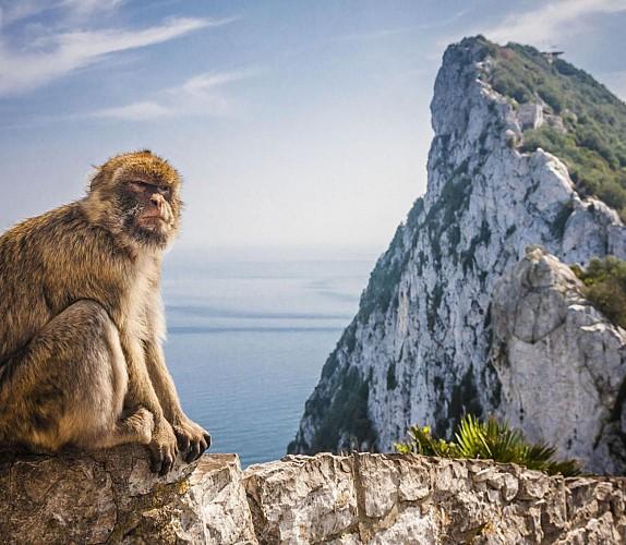 Excursion guidée à Gibraltar - au départ de la Costa del Sol