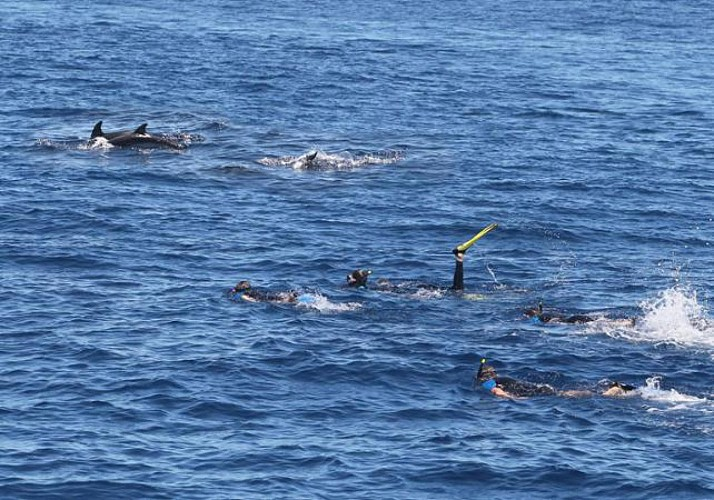 Swim with Dolphins – Day Trip in the Mediterranean – Departing from Antibes