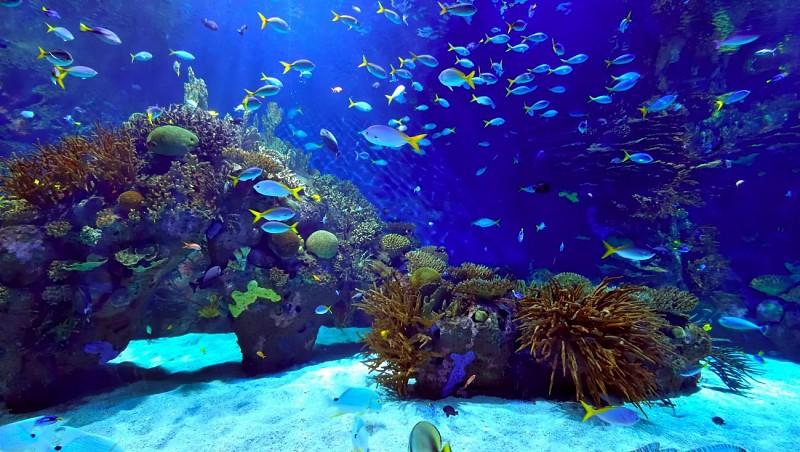 Tickets for Siam Ocean World Bangkok Aquarium