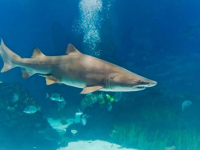 Ticket d'entrée à l'aquarium de Bangkok : Siam Ocean World