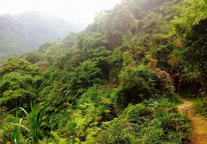 Excursion to the Tai Mo Shan Jungle