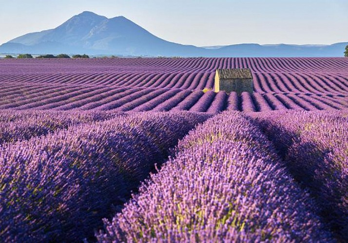 Trip to Luberon: Discover the Markets and the Lavender Fields