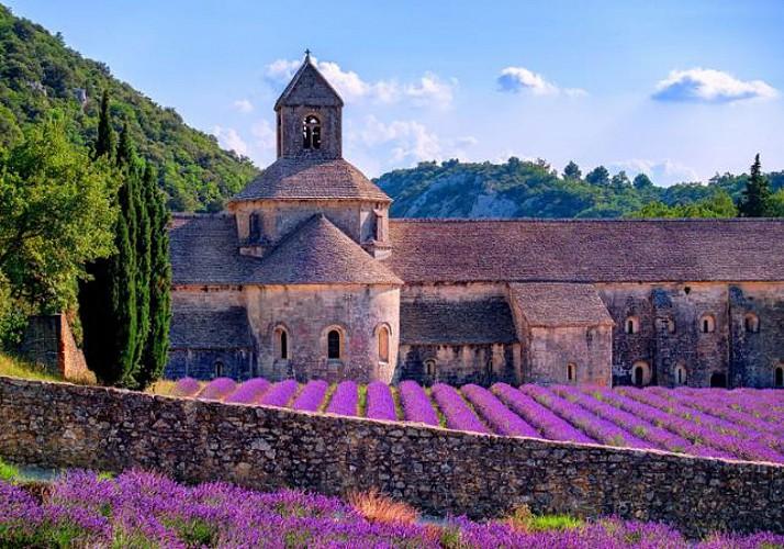 Excursion dans le Luberon : découverte de marchés et champs de lavande