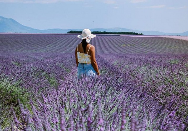 Discover the Lavender Fields