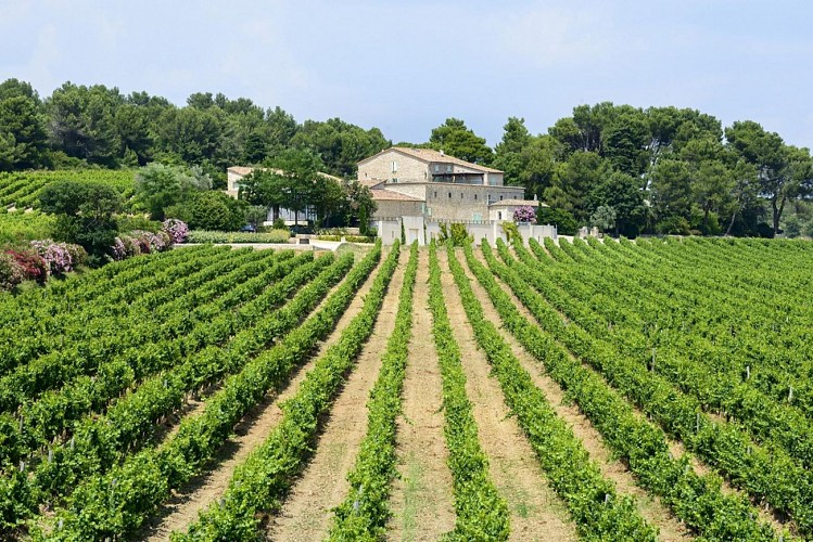 Half day around vineyards and olive groves in Languedoc: visits and tastings