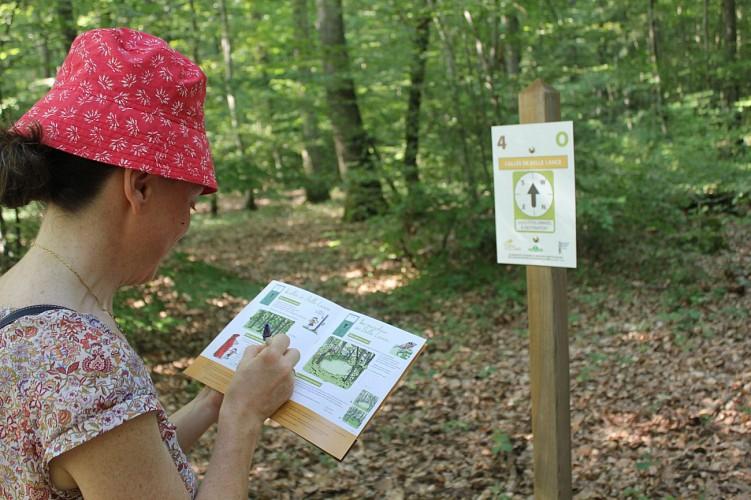 Forêt Mgis 2
