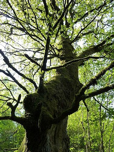 L'arbre-monument