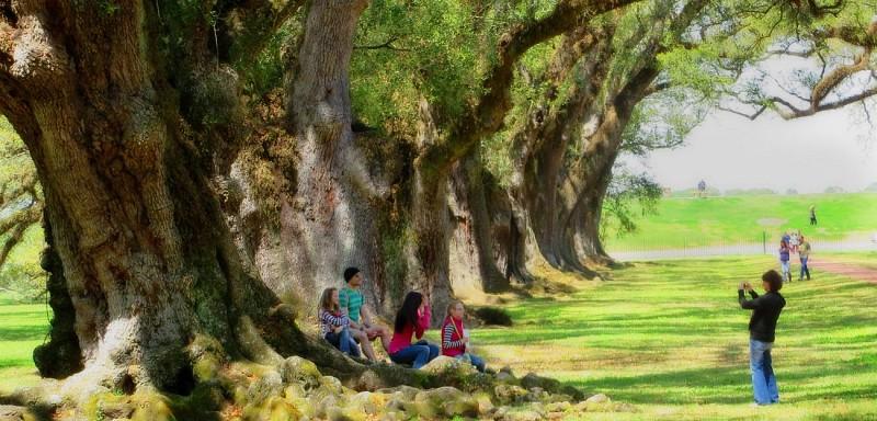 Visite guidée des plantations : Laura, Oak Alley ou Whitney (2 au choix) – Au départ de la Nouvelle-Orléans