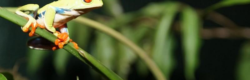 Tour d'exploration de la nature au coeur de la forêt - A proximité du Parc national Braulio Carrillo