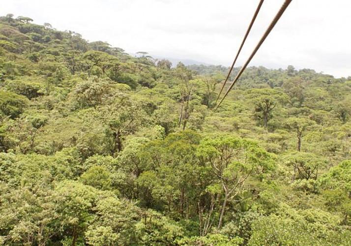 Descentes en tyrolienne - A proximité du Parc national Braulio Carrillo