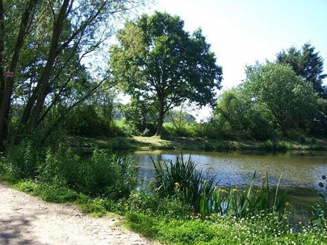 Les étangs de Blaugies