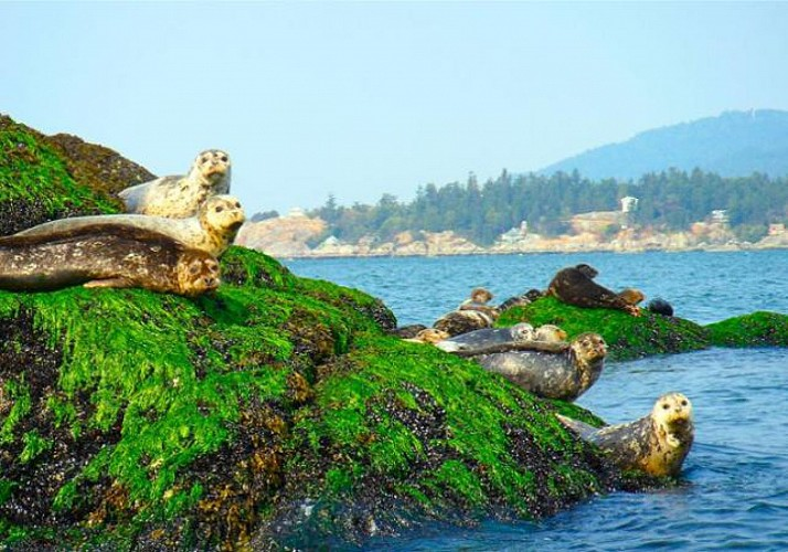 Coastal Zodiac Boat Tour and Seal Watching in Vancouver