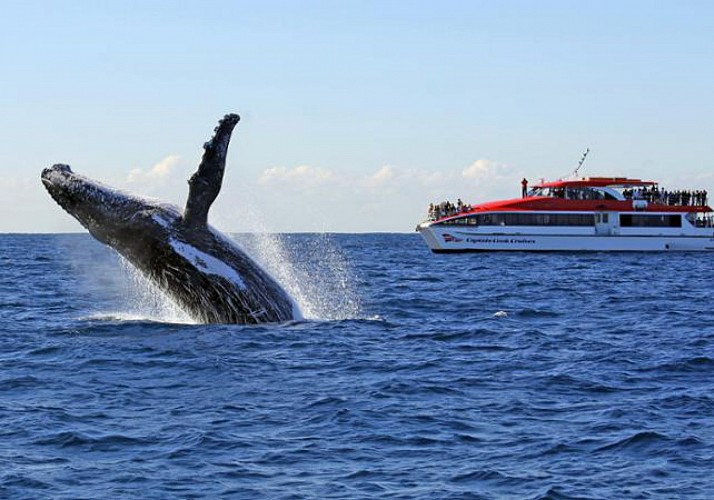 Whale Watching Cruise in Sydney