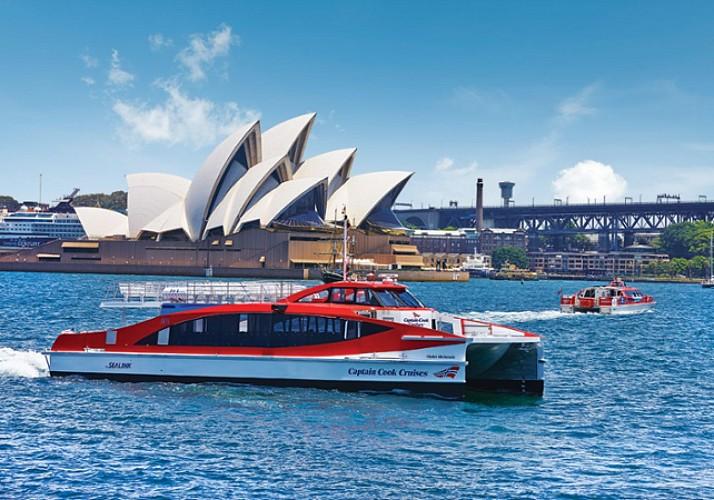 Croisière d'observation des baleines à Sydney