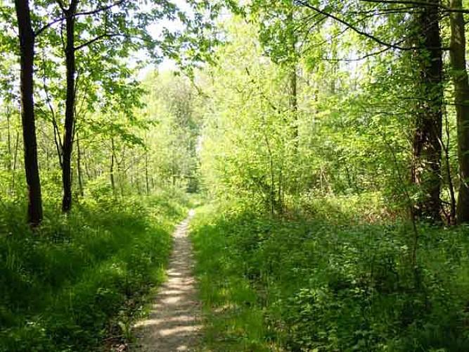 Bois de Sars-la-Bruyère