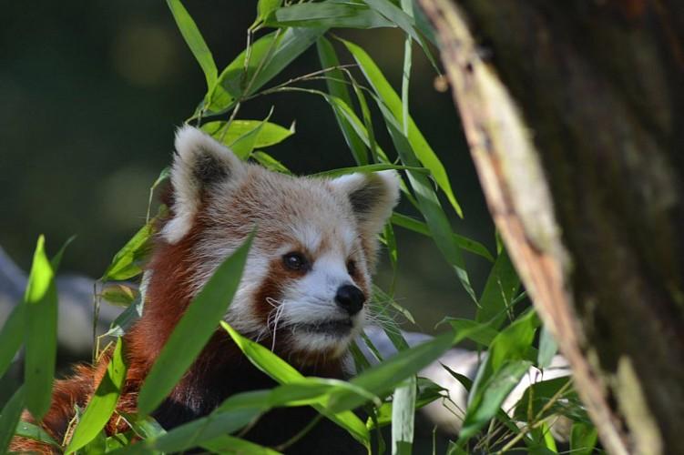 Le Parc de Clères, parc animalier et botanique