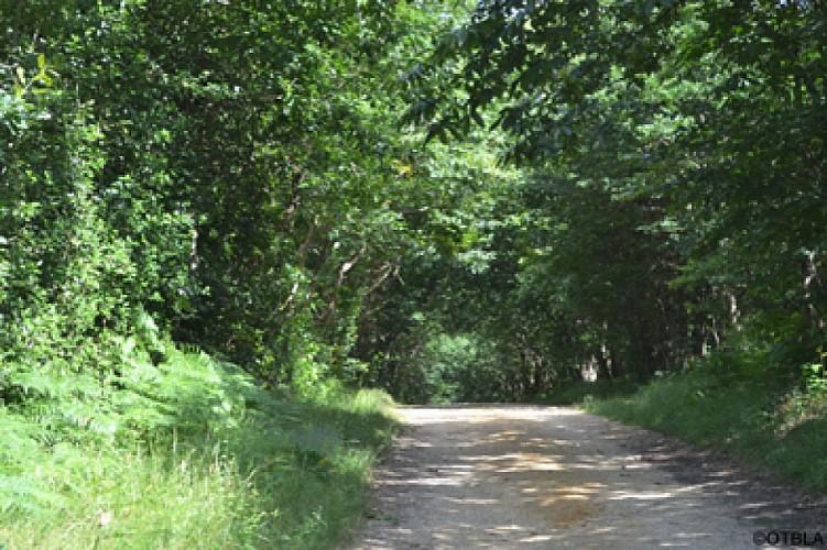 Forêt de Brissac