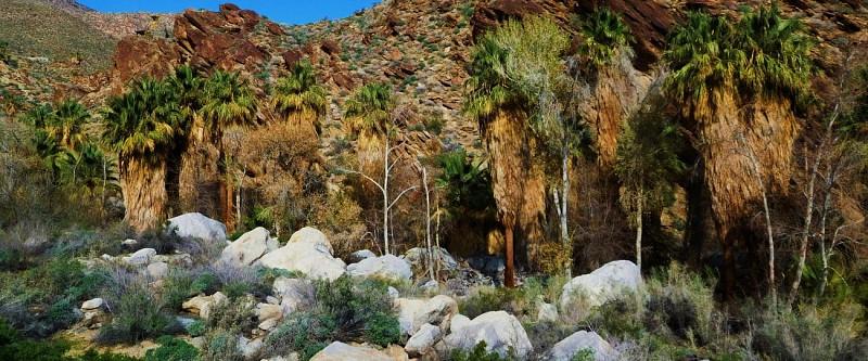 Tour en jeep et randonnée aux Indian Canyons – Au départ de Palm Springs
