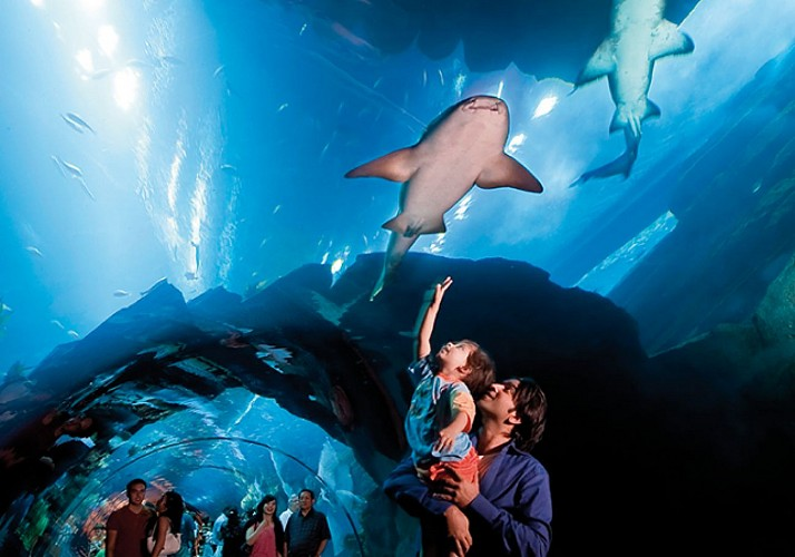 Billet Dubai Aquarium & Underwater Zoo - Attractions marines du Dubai Mall