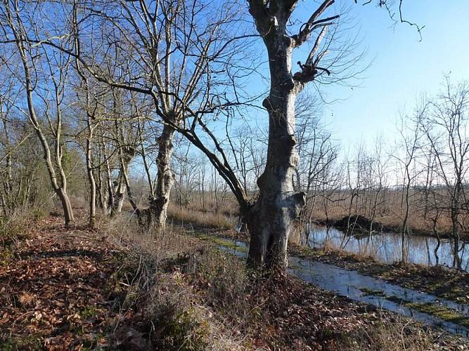 La levée de Marquet et le Marais de la Vergne