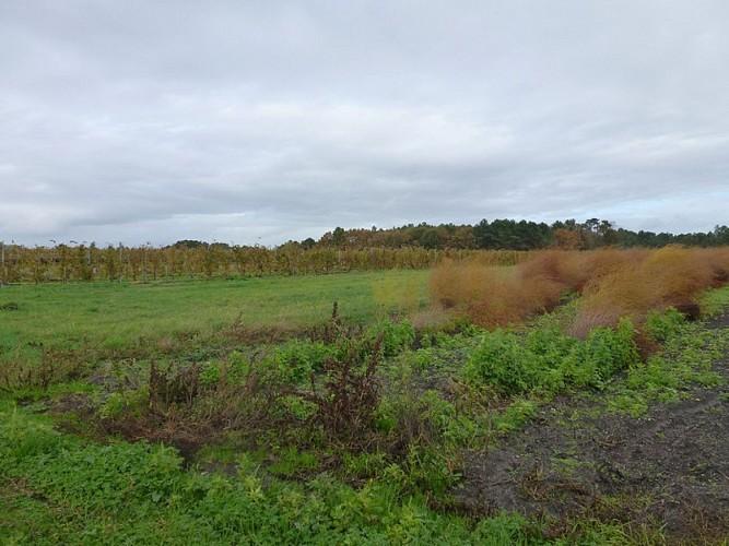 Culture d'asperges et vignes