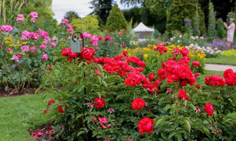 jardin des plantes - orleans 1S6A4338-1280x768