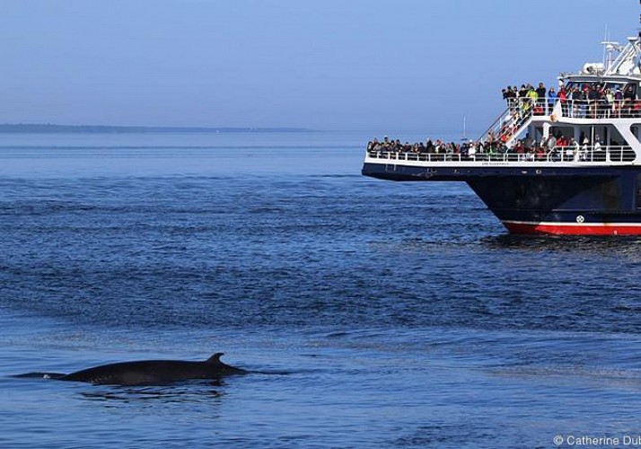 Whale observation cruise - Zodiac or boat - At Tadoussac & Baie-Sainte-Catherine