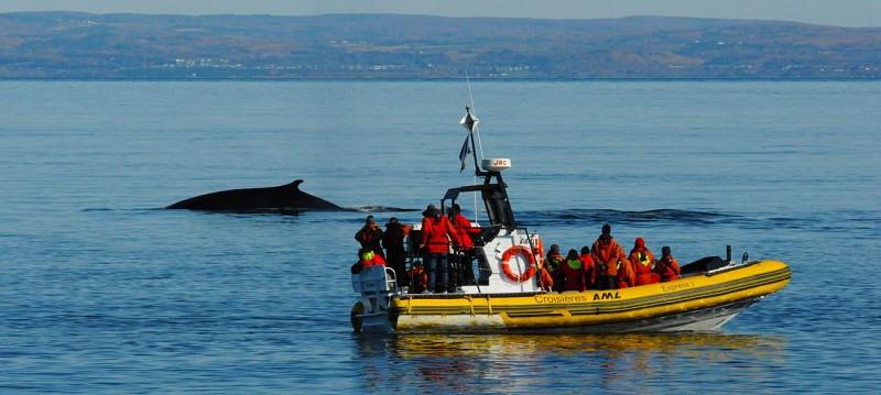Crucero de observación de ballenas en Zodiac - Salida de la Bahía Sainte Catherine