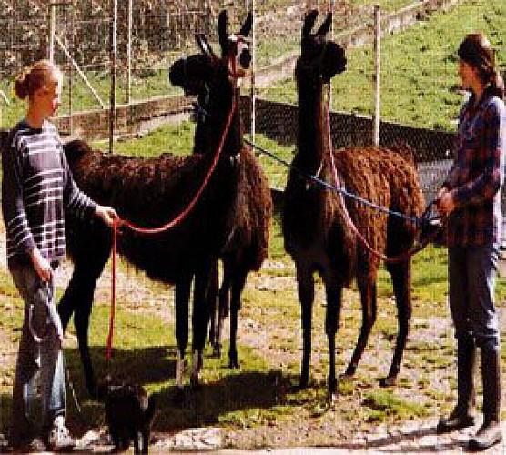 Trekking con burros y llamas