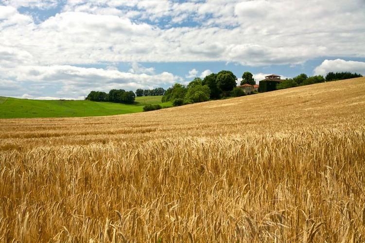 Panorama sur les terres agricoles