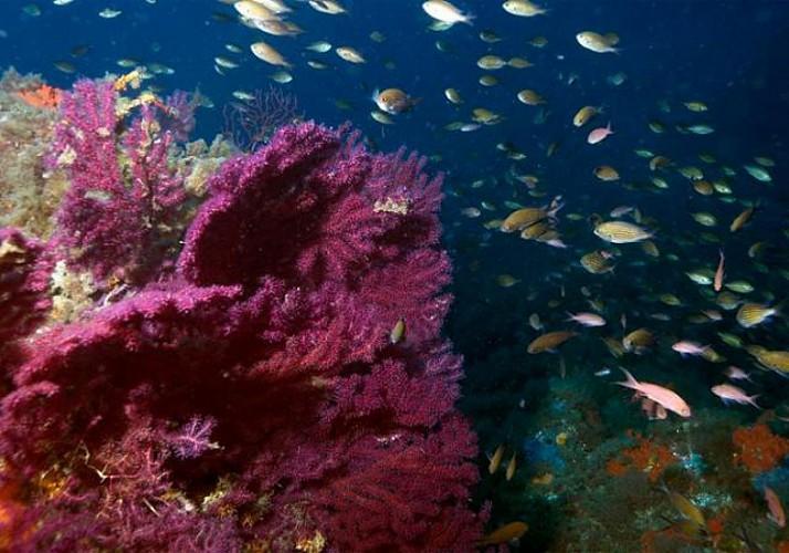Initiation à l'apnée sous-marine - à 20min de Cannes