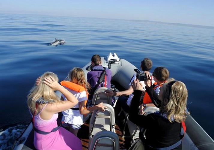 Croisière - Observation des dauphins et animaux marins de la côte de l'Algarve - départ de Faro