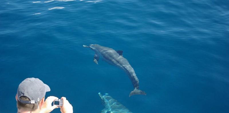 Croisière d'observation des dauphins au large de la Martinique - Au départ des Trois-Îlets