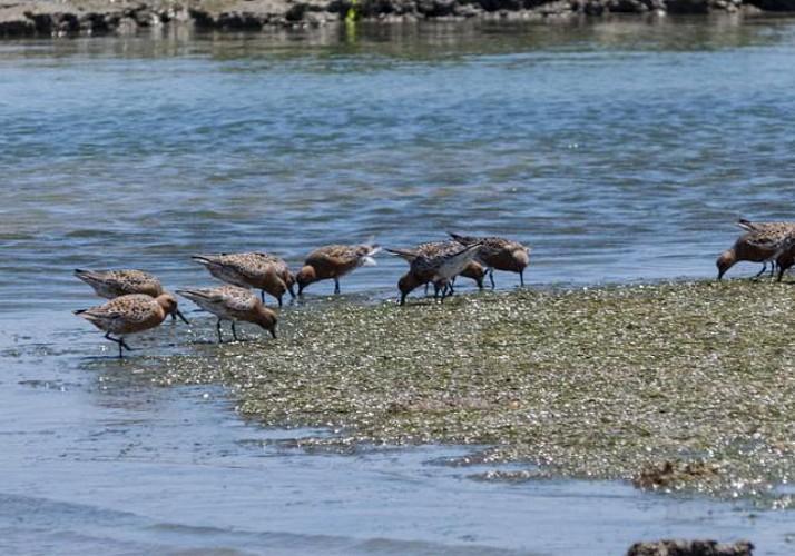 Balade en bateau - Observation des oiseaux de la Ria Formosa - Faro
