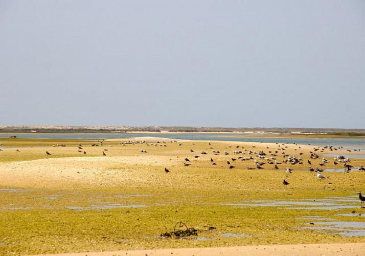Balade en bateau de pêche - Observation des oiseaux de la Ria Formosa - Faro