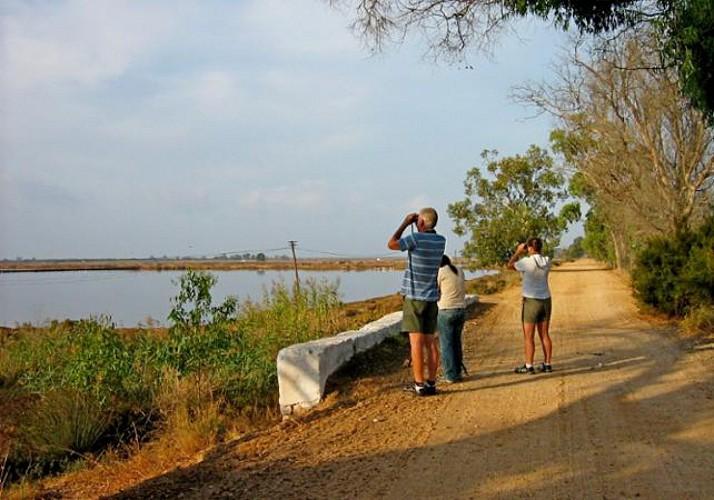 Visite guidée à pied dans le parc de la Ria Formosa - en privé - Faro