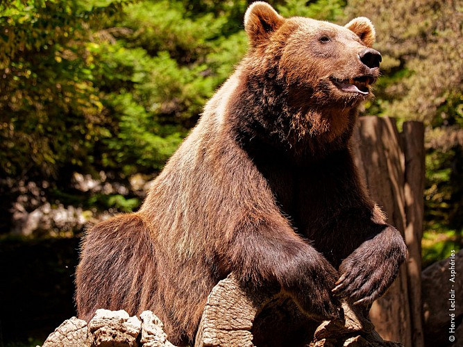 2016-parc-animalier-pyrenees-04-argeles-gazost
