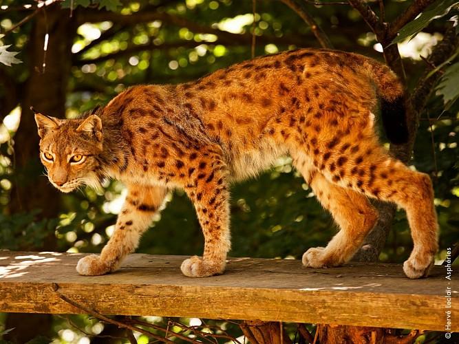 2016-parc-animalier-pyrenees-07-argeles-gazost