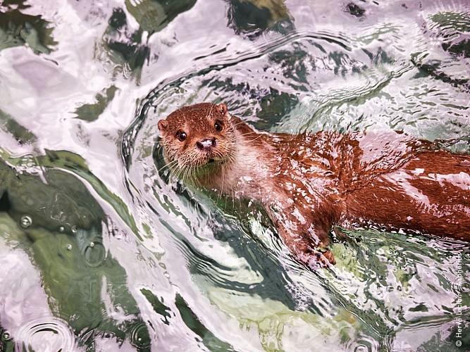 2016-parc-animalier-pyrenees-09-argeles-gazost