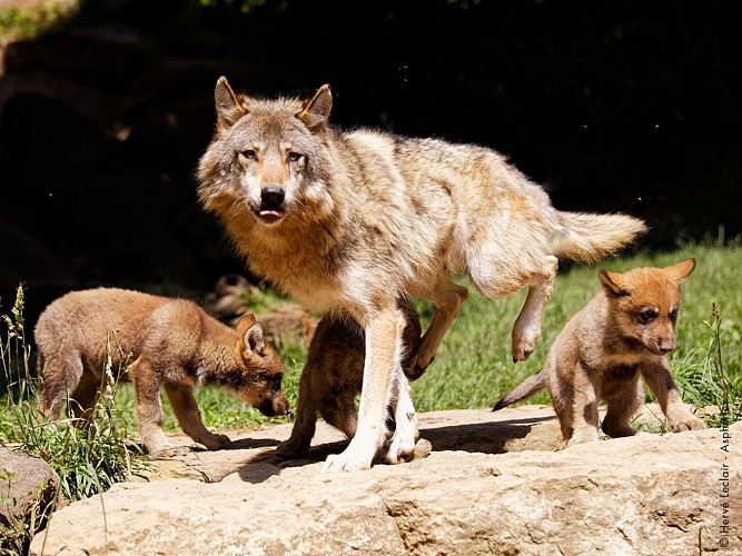 2016-parc-animalier-pyrenees-10-argeles-gazost