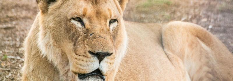 Billet Werribee Open Range Zoo - Parc Safari à 30 mn de Melbourne
