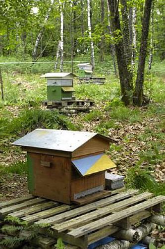 le rucher de la Brousse