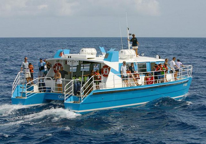 Scuba Diving around the Pidgeon Isles – Departing from Basse-Terre, Guadeloupe