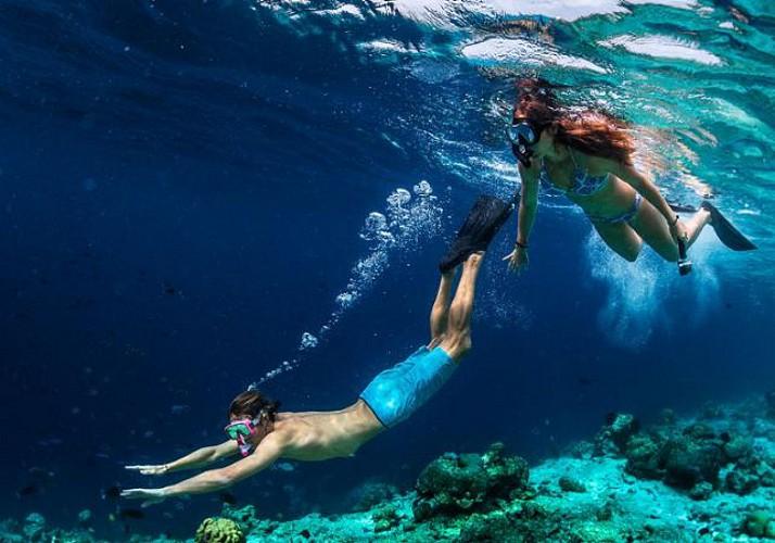 Plongée avec palmes, masque et tuba autour des îlets Pigeon - Au départ de Basse-Terre, Guadeloupe