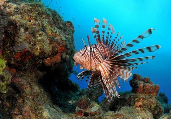 Plongée sous-marine autour des îlets Pigeon - Au départ de Basse-Terre, Guadeloupe