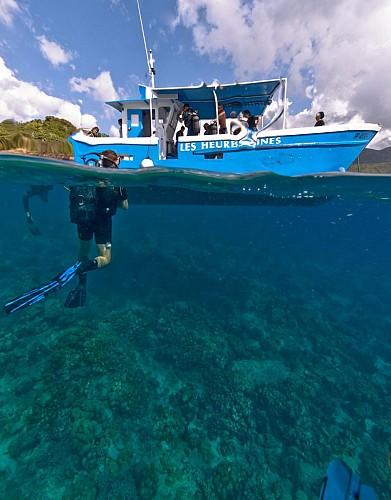 Baptême de plongée au cœur de la Réserve Cousteau - Au départ de Basse-Terre, Guadeloupe