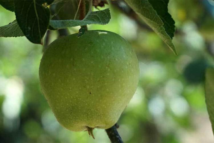 Froiteiros. A reprodución das plantas